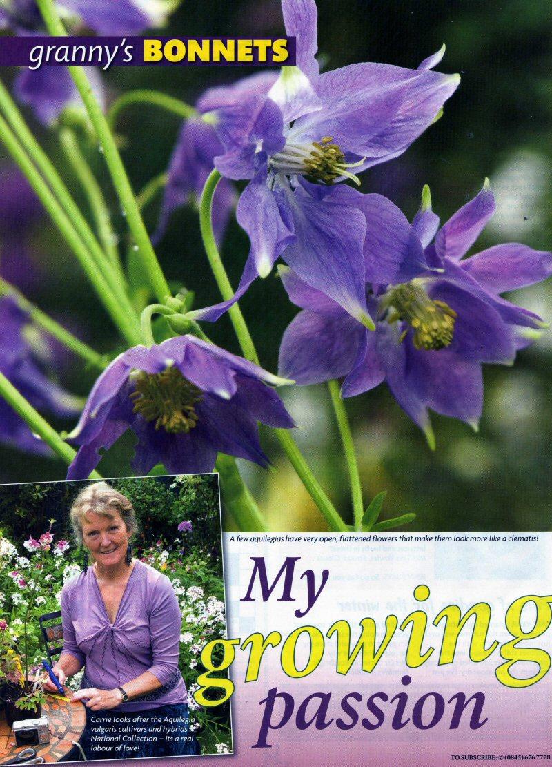 Granny's Bonnets: my growing passion. Amateur Gardening Magazine