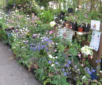 Plants for sale at Touchwood, home of the National Collections of Aquilegia
