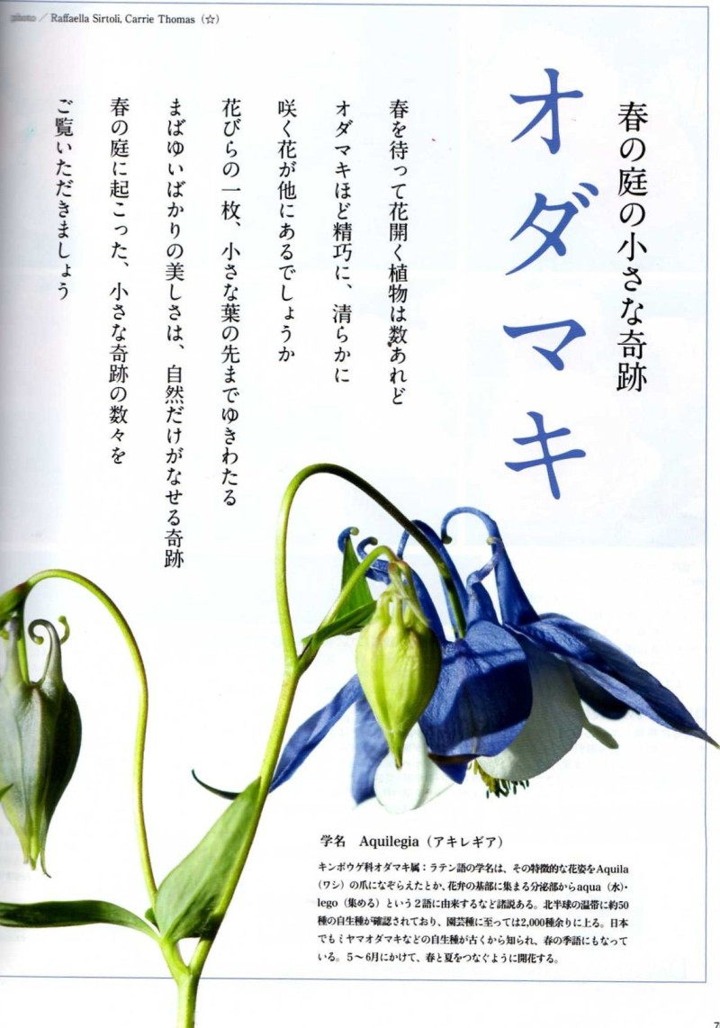 Bises magazine japan 日本 日本人 aquilegia touchwood feature article
