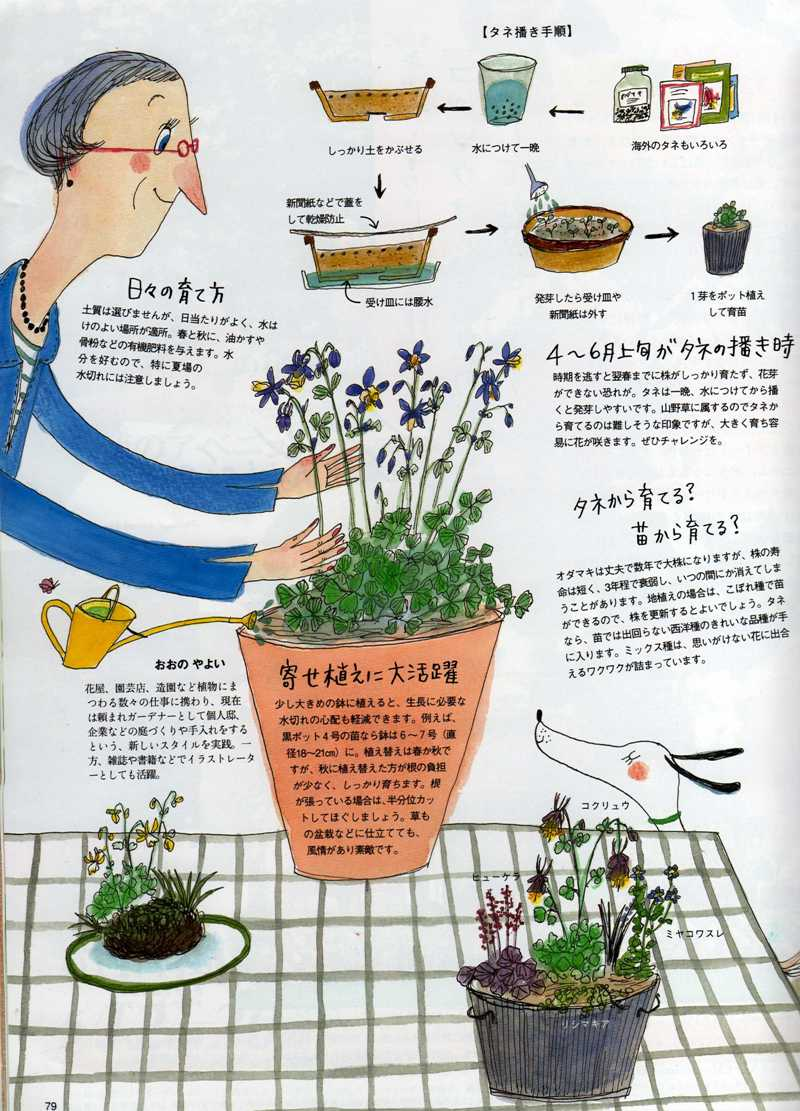 Bises magazine japan 日本 日本人 aquilegia feature article
